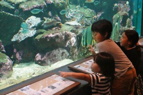 お出かけリポート/すぐそこの海にいる魚!子どもたちとゆったり過ごせる水族館/ 京都大学白浜水族館(白浜町)