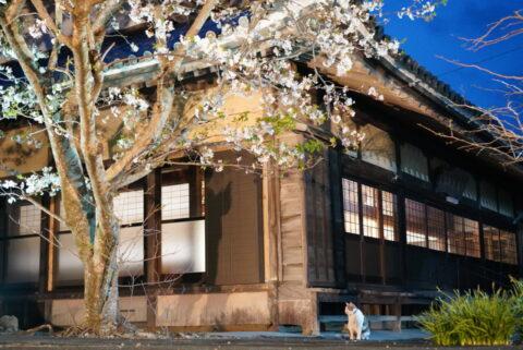 串本町のお寺